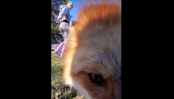 Fox Steals Phone While It's Recording, And The Footage Is Extremely Cute