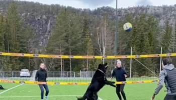 Talented Dog Plays Volleyball With Humans, Absolutely Nails It