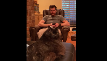 Cat Is Confused As Heck By Air Ping Pong Match Between Couple