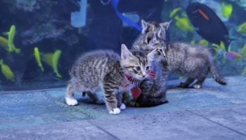 Here's A Video Of Kittens Being Released Inside The Georgia Aquarium