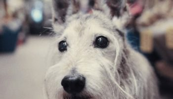 This Short Documentary About Elderly Dogs And The Owners That Love Them Is The Most Uplifting Thing You'll See Today