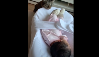 Cat Has Preciously Wholesome Reaction To Seeing Baby For The First Time