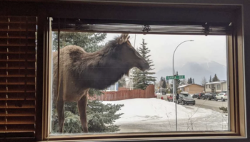'View From My Window' Is The Last Good Facebook Group