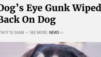 This Twitter Thread Of People's Favorite Onion Headlines Is A Perfect Way To Waste 20 Minutes Laughing