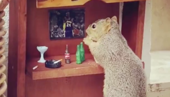 Somebody Built A 'Cheers' Bar For A Squirrel, And Yes, It's Frigging Adorable