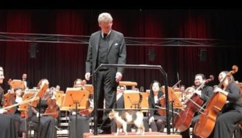 Watch This Cat Delightfully Invade A Istanbul Concert Hall To The Amusement Of The Orchestra