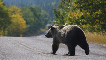 National Parks Are Empty During The Pandemic — And Wildlife Are Loving It