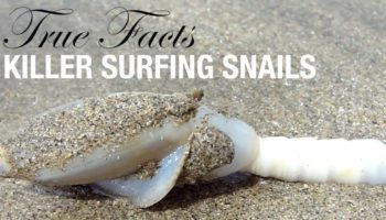 Ze Frank Hilariously Narrates True Facts About Killer Surfing Snails