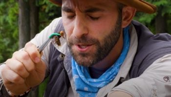 Japan's Murder Hornets Have Reached The US — Here's Coyote Peterson Letting Himself Get Stung By One