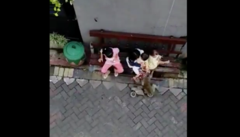A Monkey Tears Into An Alley On A Cycle, And That's Not Even The Weirdest Part Of The Video