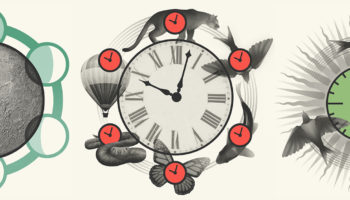 What Is Time? A History Of Physics, Biology, Clocks And Culture