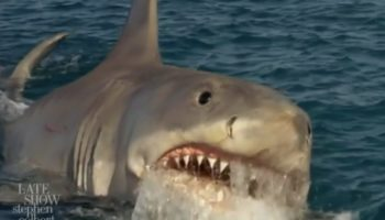 If Beachgoers Were As Carefree About Shark Attacks As They Are About Coronavirus