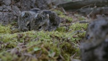 This Video Of Baby Hares In The Wild Might Be The Most Relaxing Thing You See Today