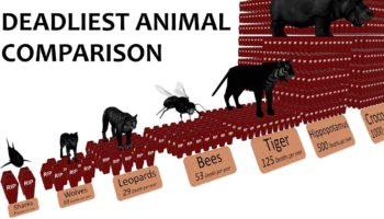 A Comparison Of The Deadliest Animals On Earth, Visualized