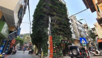 Vietnamese Man Uses Two Creeping Plants To Turn Five-Story Building Into A Vertical Garden