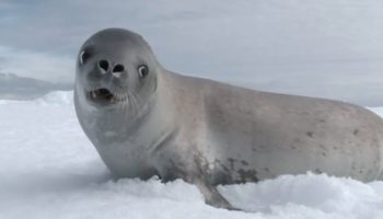 Someone Synced Up Barking Seals To The Tune Of 'Kiss From A Rose'