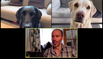 Guy Holds A Parody Zoom Meeting With His Dogs, And It's Utterly Delightful