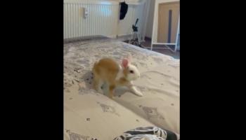 We Had No Idea Rabbits Could Move This Fast