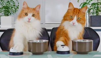 Watch This Cat Owner Smartly Train His Cats Into Ringing A Bell