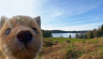 Here's An Adorable Supercut Of Wildlife Captured On Camera Traps In The Forests Of Quebec