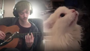 Someone Made A Guitar Accompaniment To This Cat's Emotional Meows
