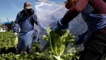 These 5 Foods Show How Coronavirus Has Disrupted Supply Chains