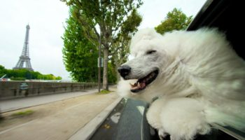 The Reason Why Dogs Like To Hang Their Heads Outside Car Windows