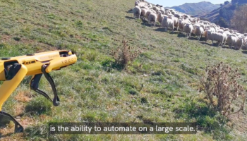 If A Robot Dog Were To Herd Sheep, It Might Look Something Like This