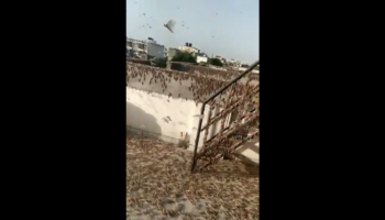 An Indian City Was Attacked By Locust Swarms