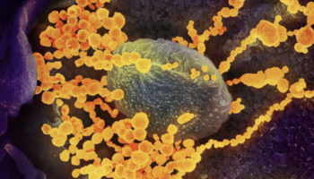 Why Immunity To COVID-19 Is So Complicated