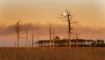 The Haunting Ghost Forests Of Maryland's Eastern Shore