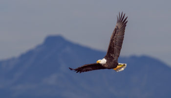 The Unlikely Journey Of An Eagle Feather