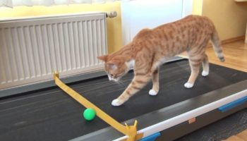 This Cat Has A Hilarious Reaction To Discovering His Owner's Treadmill For The First Time