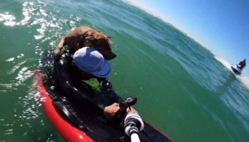 Heroic Surfer Rescues A Stranded Dog On His Hydrofoil Board