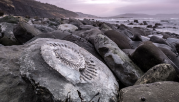 Salvaging Fossils On The Jurassic Coast