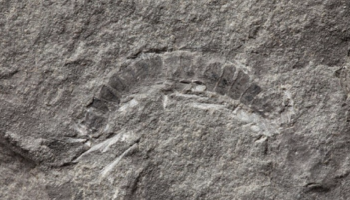Scientists Have Discovered The World's Oldest Known Land Animal. It's 425 Million Years Old