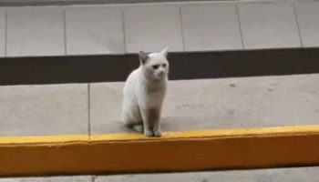 This Sneaky Stray Cat Tricked This Lady Into Buying Her Treats