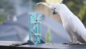 Watch This Cockatoo Masterfully Solve This 3-D Printed Puzzle