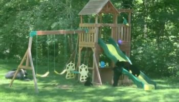 These Homeowners Were Surprised To Find A Family Of Bears Having Fun In Their Backyard Playground