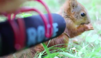 This Is What You Hear When You Put A Microphone Next To A Baby Squirrel