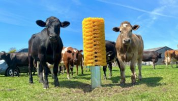 These Cattle Go Absolutely Bananas After These Farmers Install A Giant Cow Brush Out In The Field