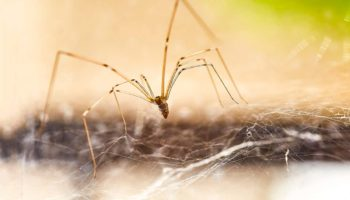 Lenses Made With Spider Silk Could Help Take Pictures Inside The Body