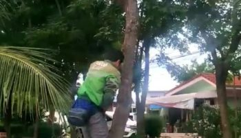 Man Rescues Cat Trapped On High Branch
