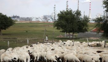 Bubonic Plague Found In A Herder In Inner Mongolia, China Says