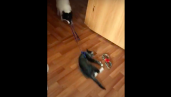 Dog Plays With Cat In The Worst Way Possible