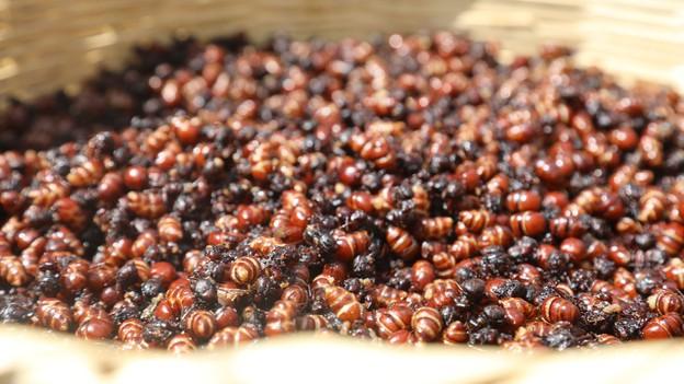Could Eating Ants Help Us Live Longer?