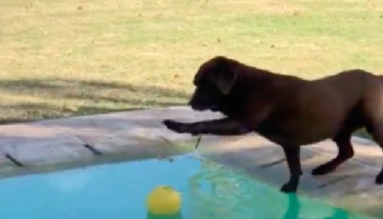 Dog Wants To Play With Ball. Dog Also Does Not, Under Any Circumstance, Want To Get Wet