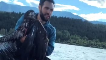 Man Rescues Bald Eagle From Drowning In Extraordinary Footage Caught On Camera