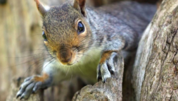 Squirrel Tests Positive For The Bubonic Plague In Colorado