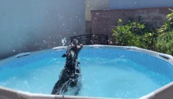 Puppy Goes Into Pool, Instantly Becomes A Shark
